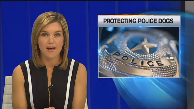 Check Out Our Going To The Dogs – Making the KCTV5